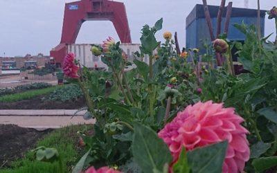 Studiebesök till Blomsterpiren